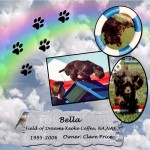 Clare Price's Bella