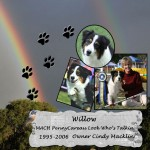 Cindy Macklin's Willow